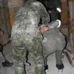 Akademia Obrony Saggita Strzelanie Bojowe Szkolenie Antyterrorystyczne 005