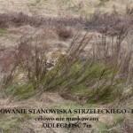Akademia Obrony Saggita Tadeusz Dubicki Strzelanie Bojowe Warsztaty Snajperskie 3 21